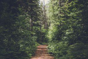 path 300x200 - path